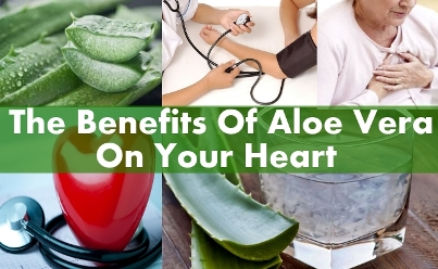 Aloe Vera High Cholesterol Level High Blood Pressure And Heart on in and cholesterol
