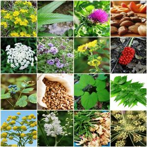 20 Herbs That Act As Natural Birth Control