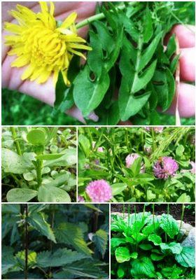 5 Backyard Herbal Remedies To Harvest Yourself