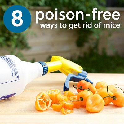 8 Natural, Poison-Free Ways to Get Rid of Mice