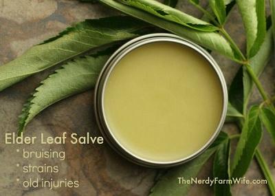 Homemade Elder Leaf Salve
