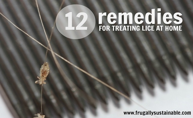 lice-feature