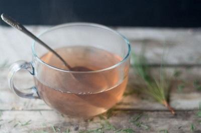 Healing Homemade Conifer Tea
