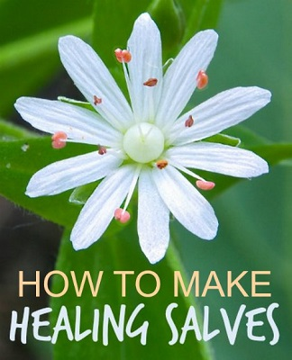 How To Make Healing Salves