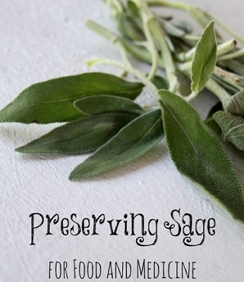 How To Preserve Sage For Food And Medicine