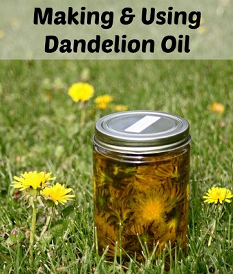 Making And And Using Dandelion Oil