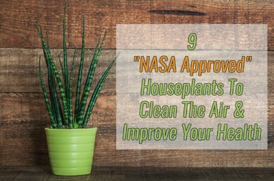 9 NASA Approved Indoor Houseplants To Clean The Air & Improve Your Health