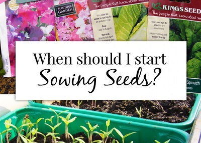 When Should I Start Sowing Seeds