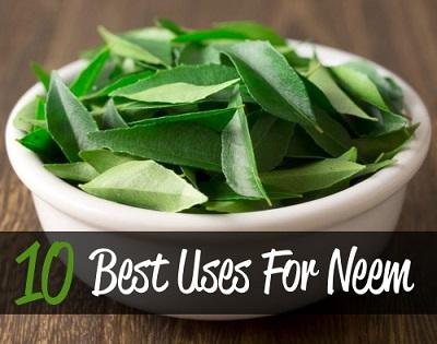 10 Best Uses For Neem