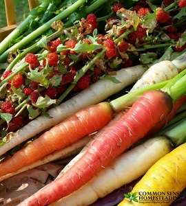 Anti-Candida And Anti-Psoriasis Diet – 9 Steps To Healing