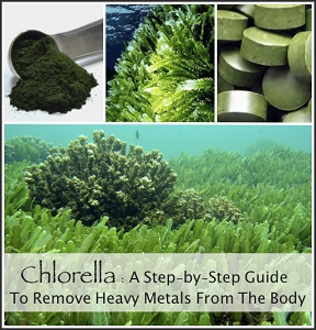 Chlorella – A Step-By-Step Guide To Remove Metals From The Body