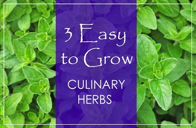3 Easy to Grow Culinary Herbs 1