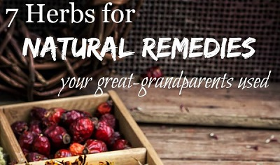 7 Herbs for Natural Remedies Your Grandparents Used