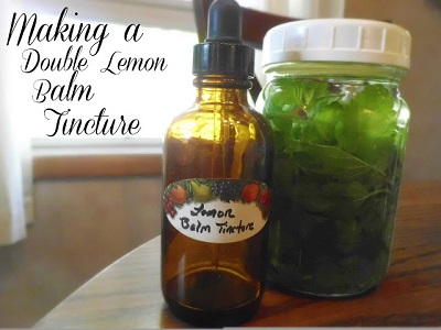 how-to-make-a-double-strength-lemon-balm-tincture-1