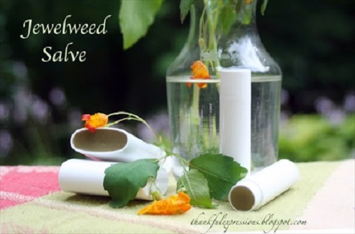 How to Make Jewelweed Salve