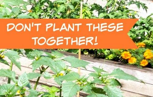 Companion Planting Part 2