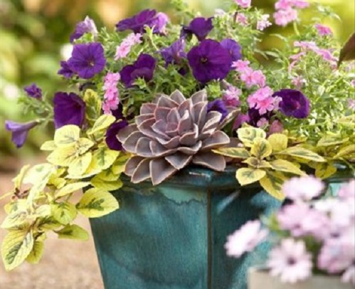 Beautiful Container Gardens