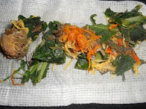 Comfrey and Calendula Poultice