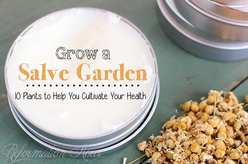 Top Healing Herbs To Grow