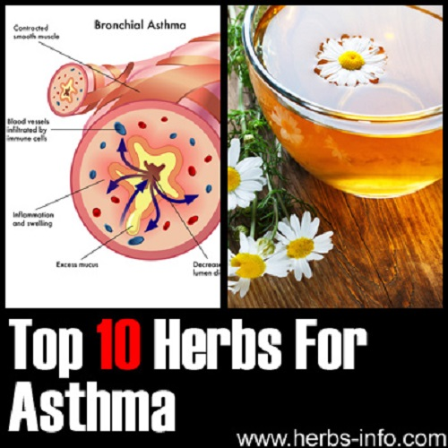 Herbs to Treat Asthma
